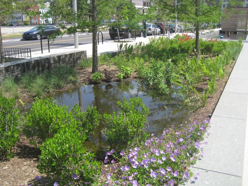 rain garden to prevent storm damage