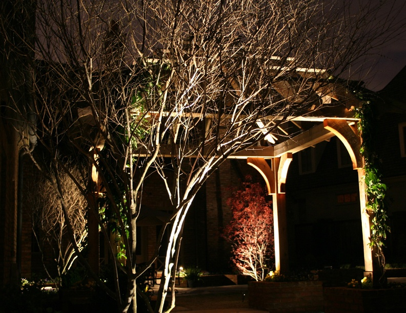 Uplighting on trees and a pergola