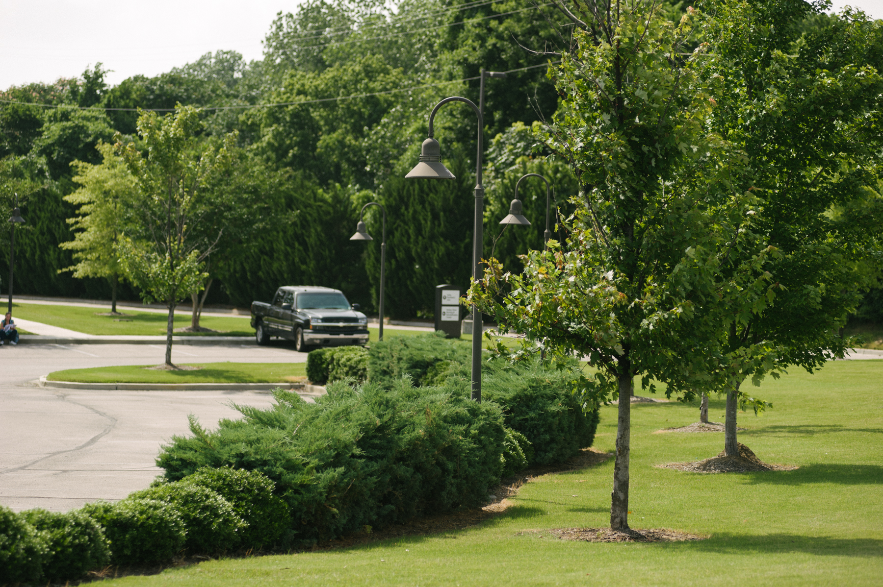 commercial landscaping parking lot with trees and shrubs