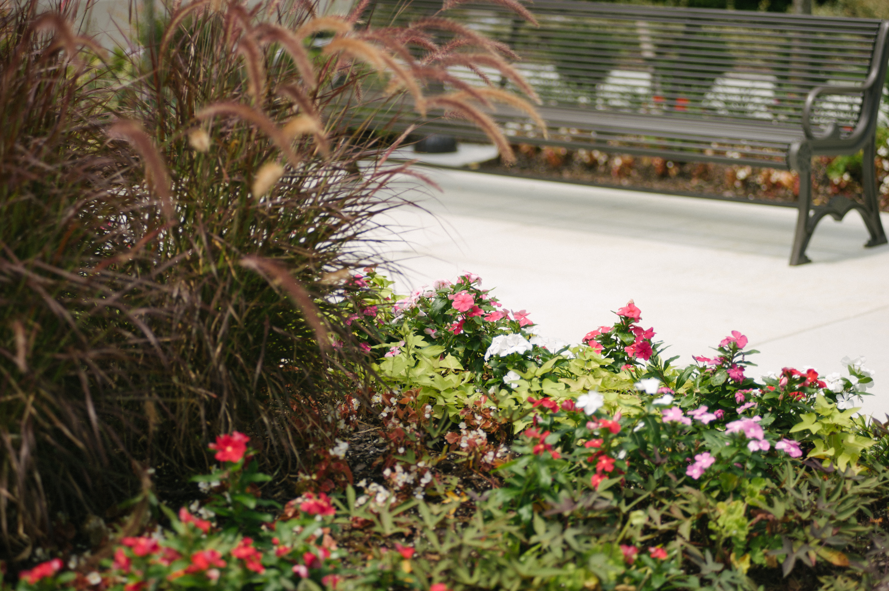 Plant bed with variety of annual flowers