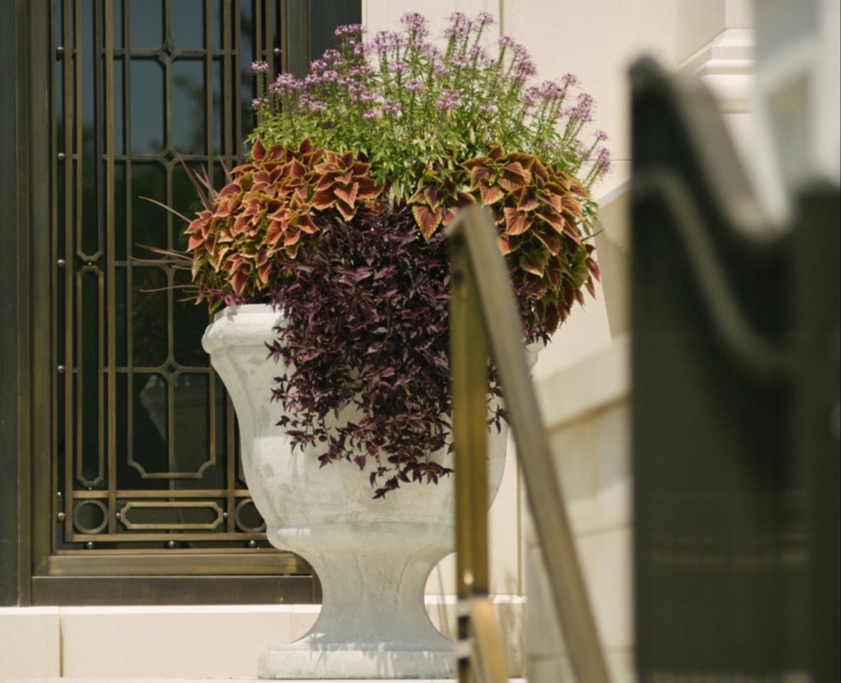 Container planting in entrance