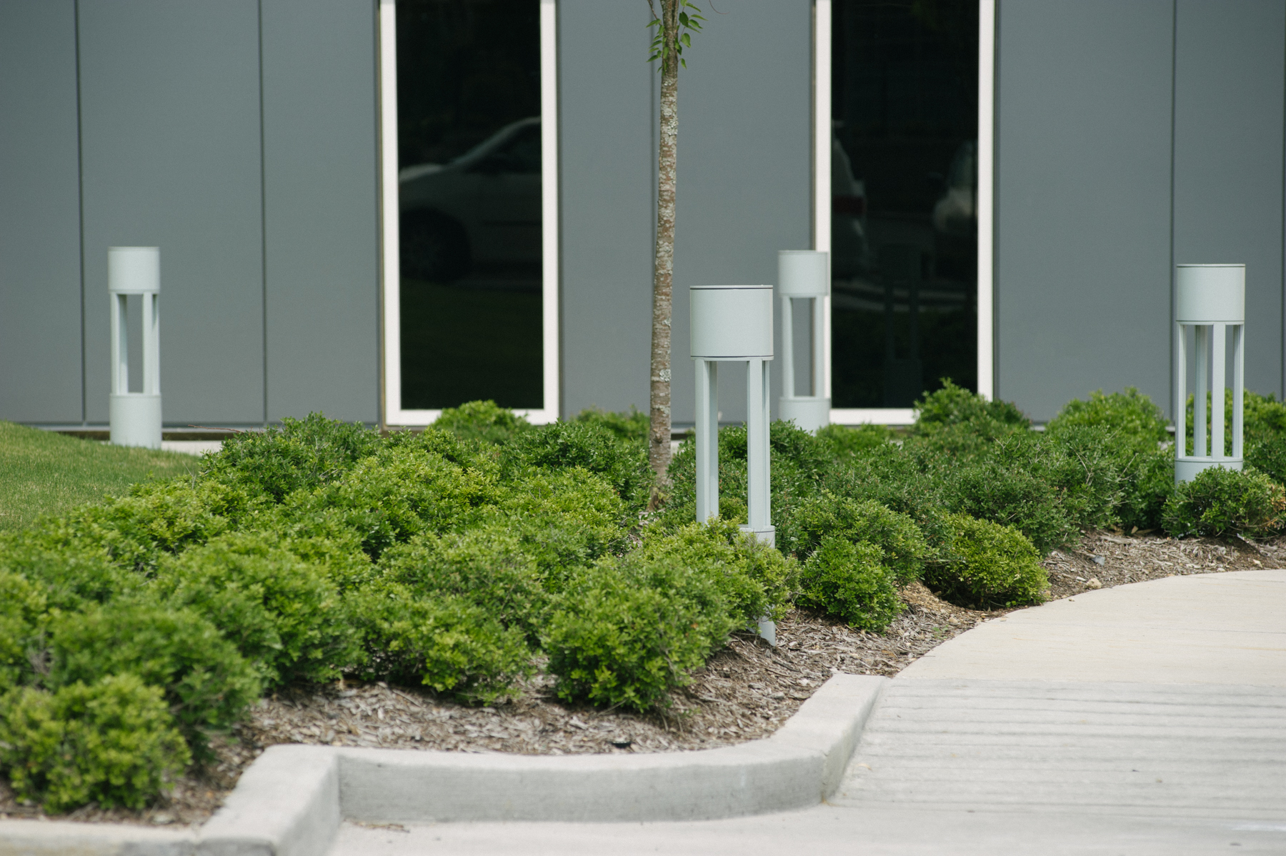 Shrubs in mulch on commercial landscape