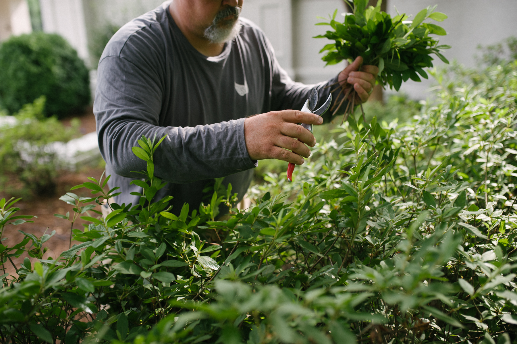 professional plant pruning on commercial property
