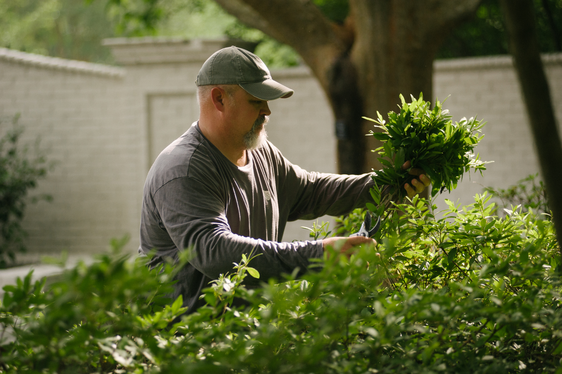 commercial landscaping crew pruning shrubs