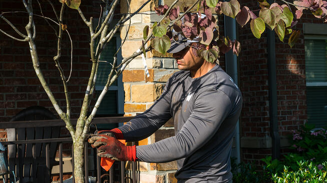 professional tree pruning on commercial property