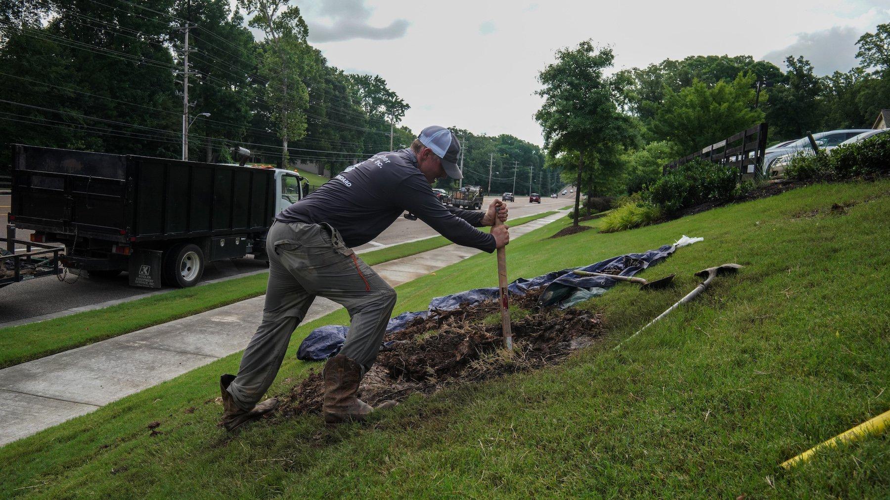 Landscape team planting a tree