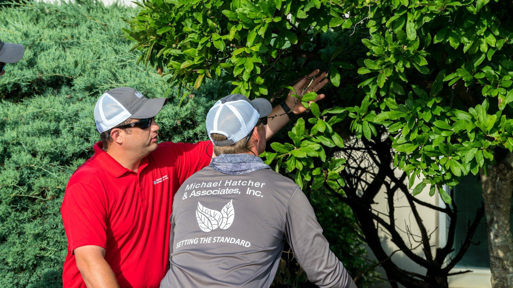 Hatcher Landscape manager inspecting industrial park landscape