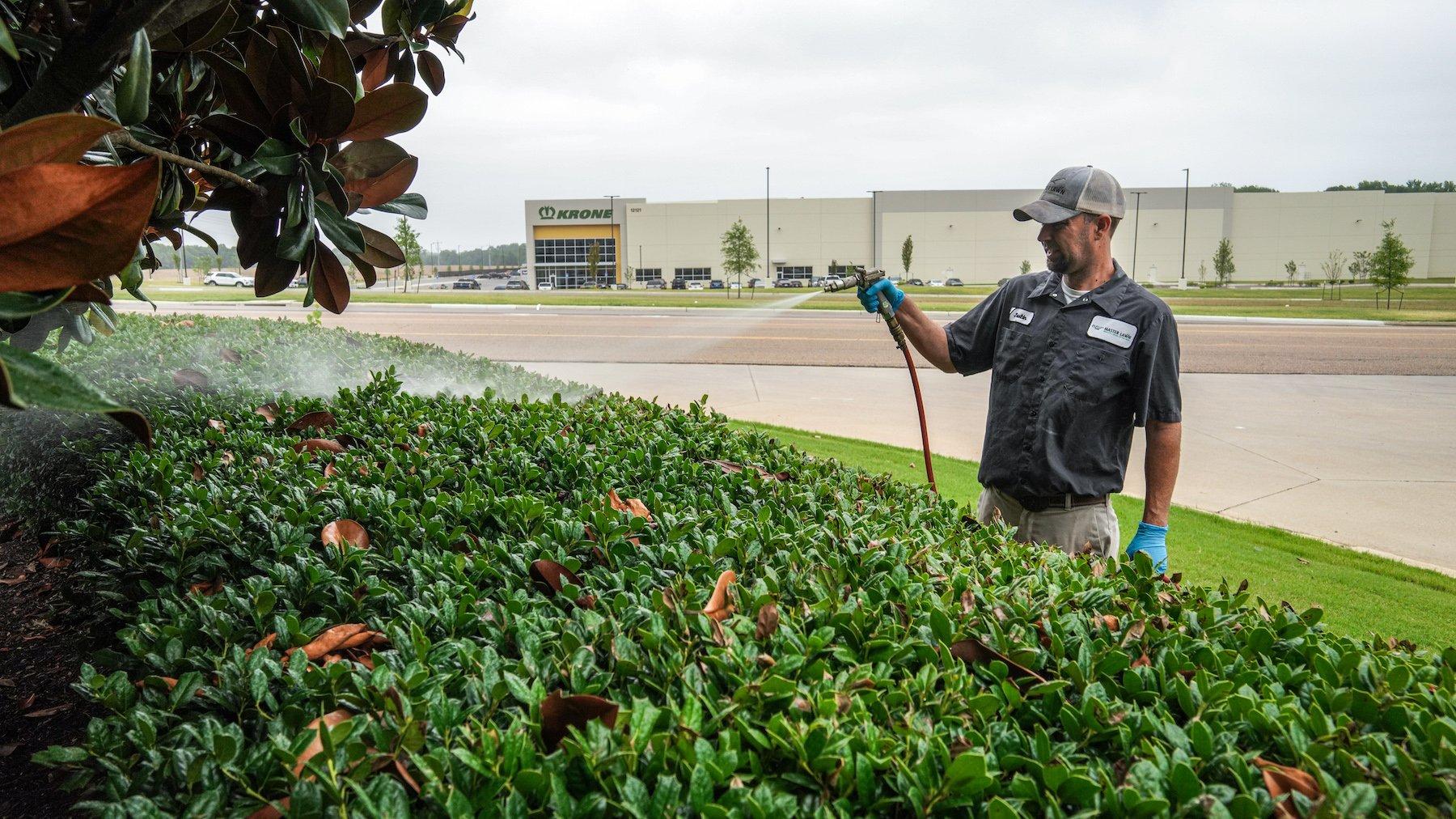 Technician spraying shrubs