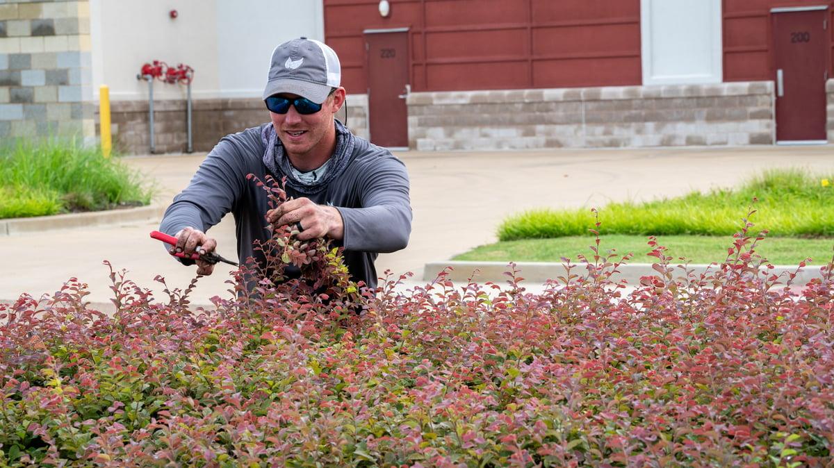 shrub pruning at senior living community
