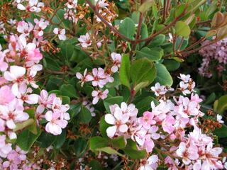 7 Drought Tolerant Plants to Plant Now to Ensure Low Maintenance Later