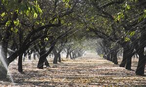 Irrigation system upgrades