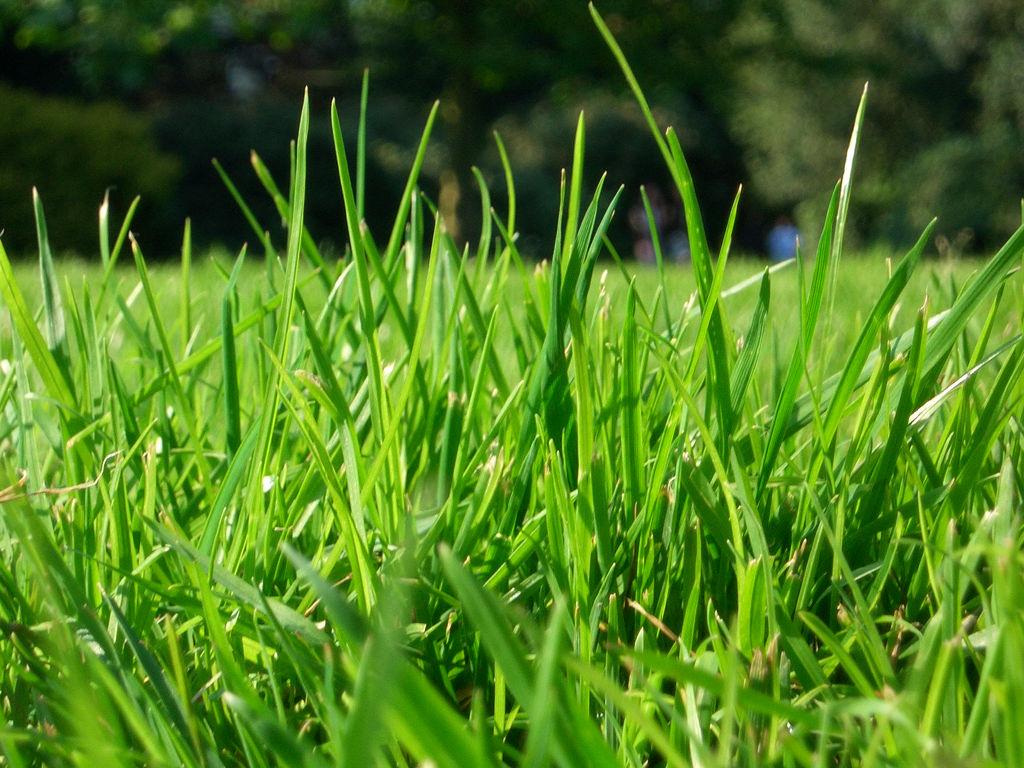 nice green grass