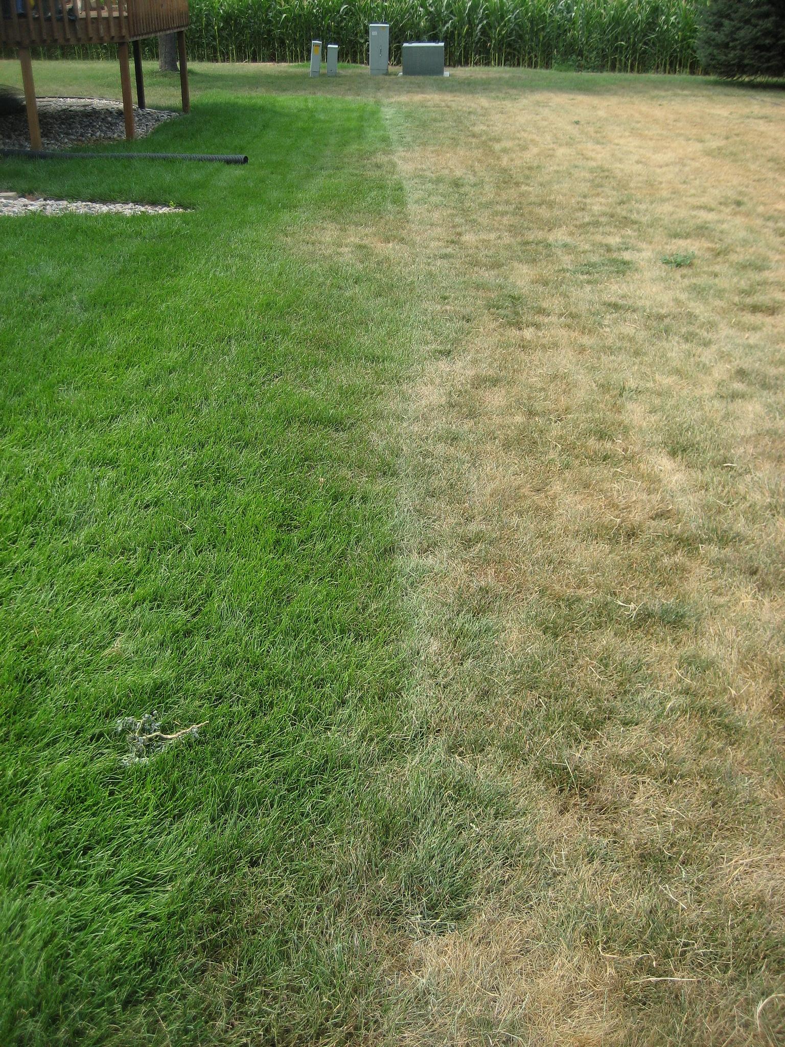 grass comparison