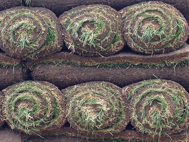 add sod or plant grass seed