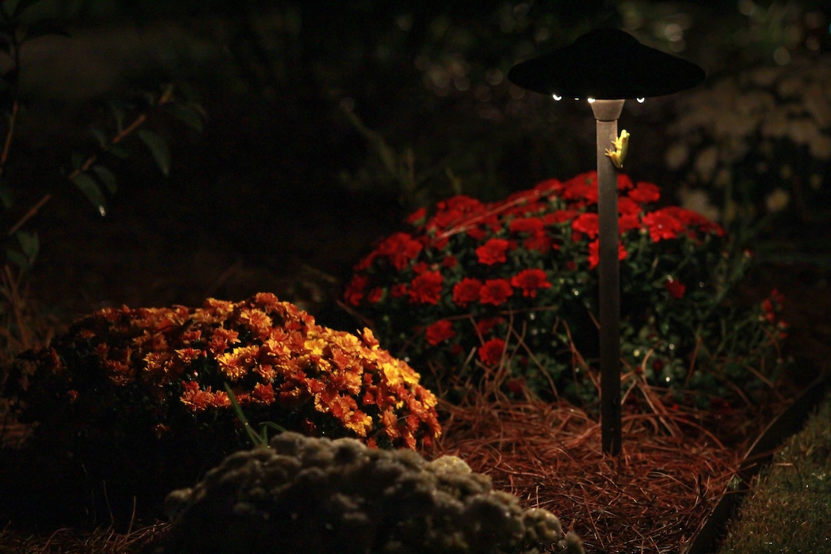 plant landscape lighting