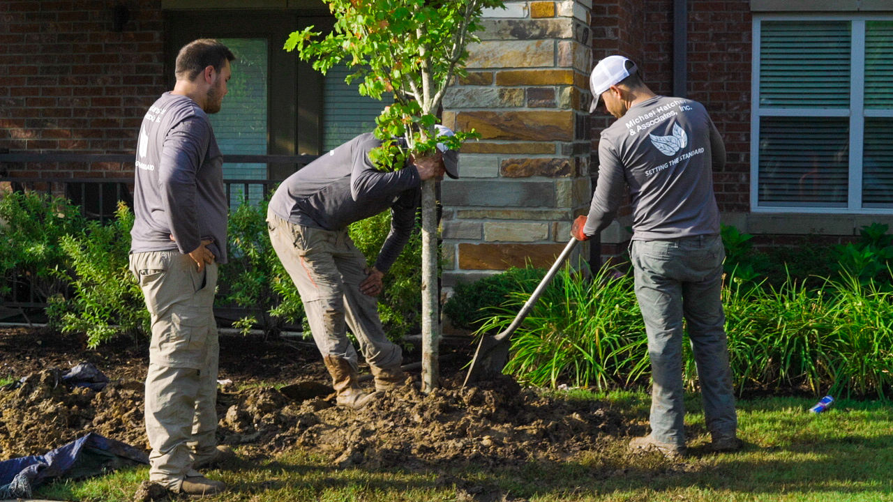 Hatcher landscape crew installing a tree