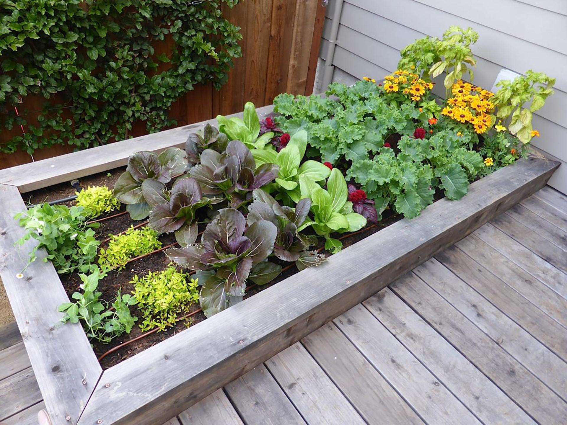 Urban Garden Project